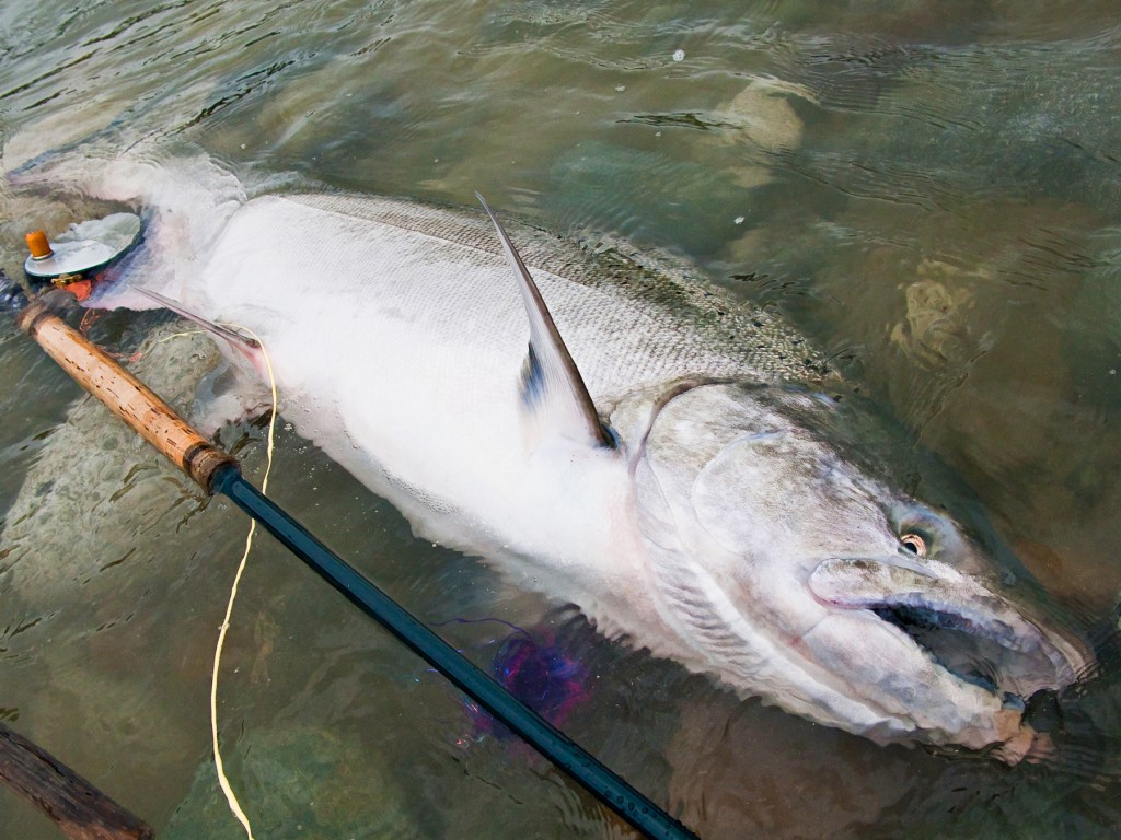 Here's what we're talking about when we say Dean River Chinook salmon.