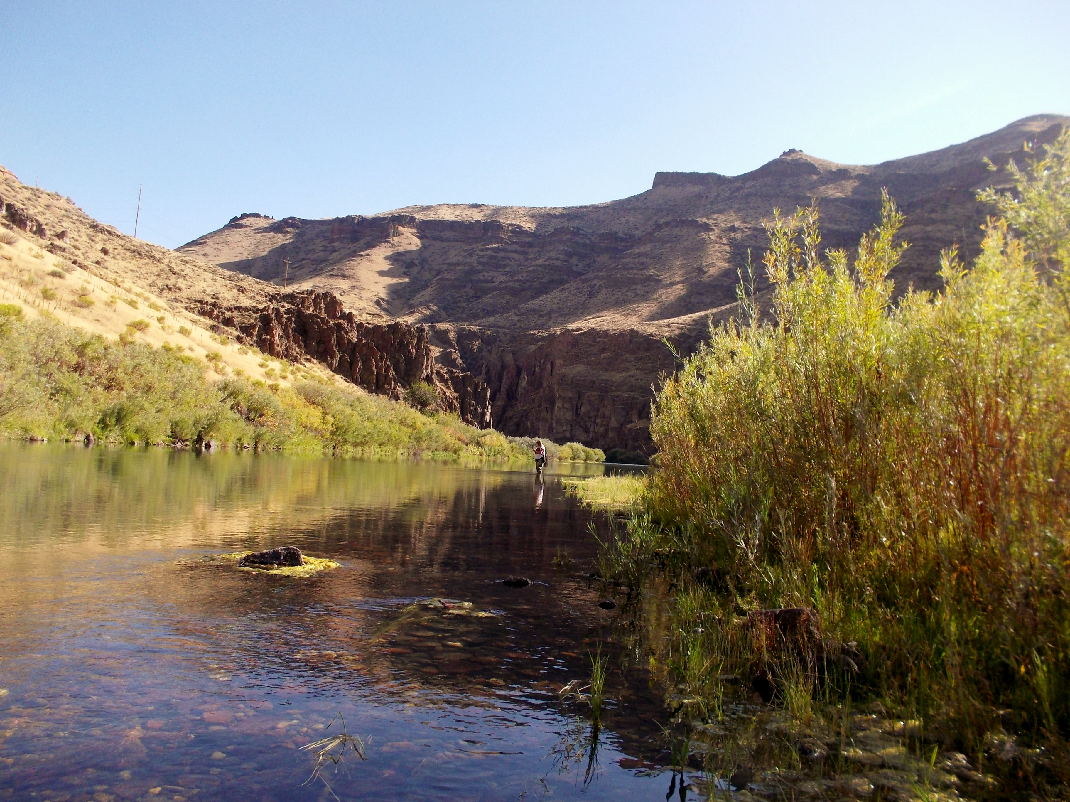 Redsides meeting tonight owyhee river the caddis fly for Owyhee river fly fishing