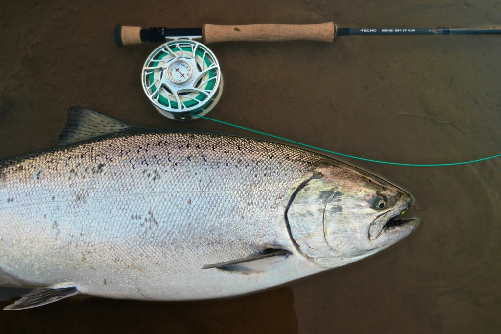 Oregon Hatchery spring chinook on ECHO BOOST 8 wt.