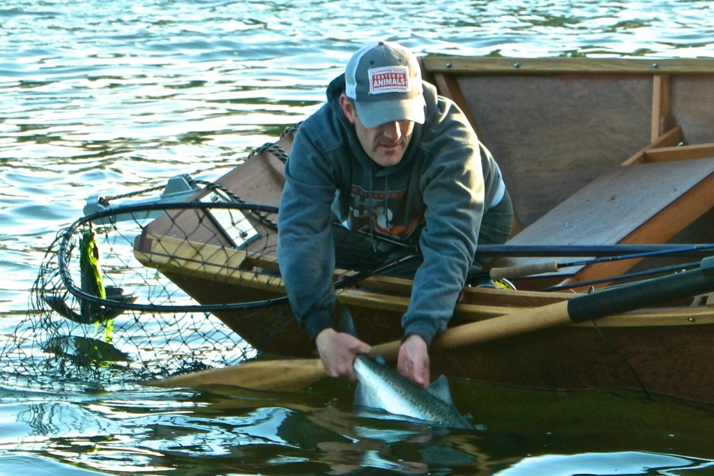 Rob Perkin releases a chrome wild spring chinook on a Comet.