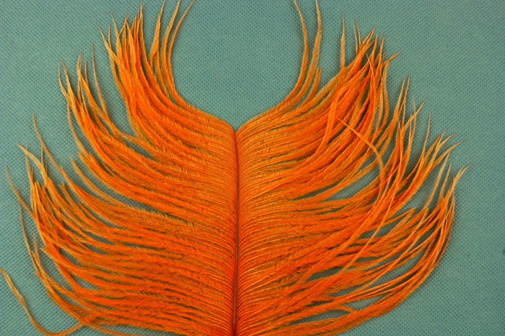 This is an excellent ostrich plume, probably several years old. I do not remember the origin.