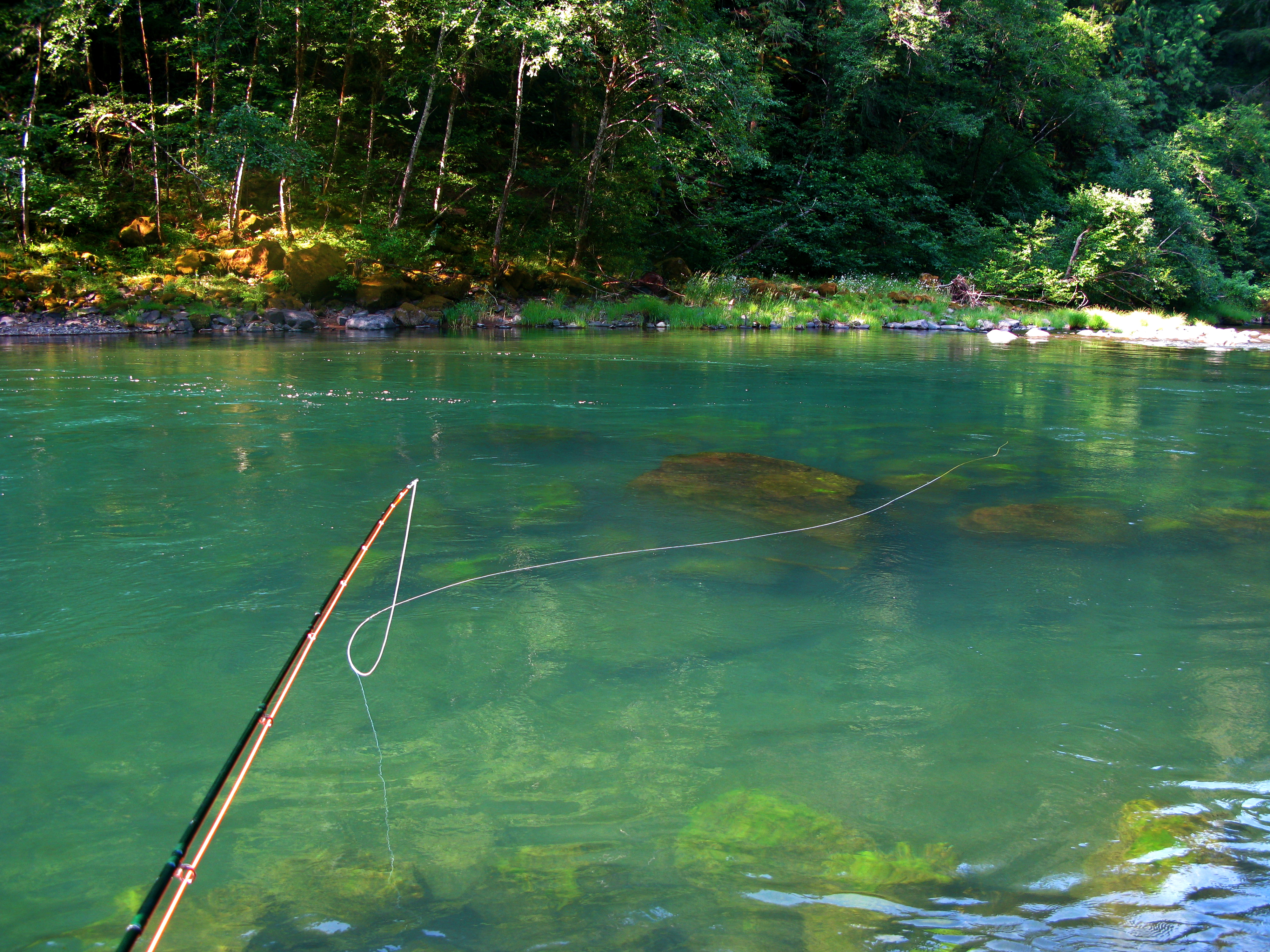 Conservation News: Proposed Frank Moore Wild Steelhead Sanctuary