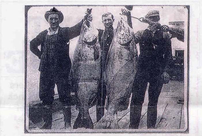 Chinook_salmon,_Astoria_Oregon_circa_1910