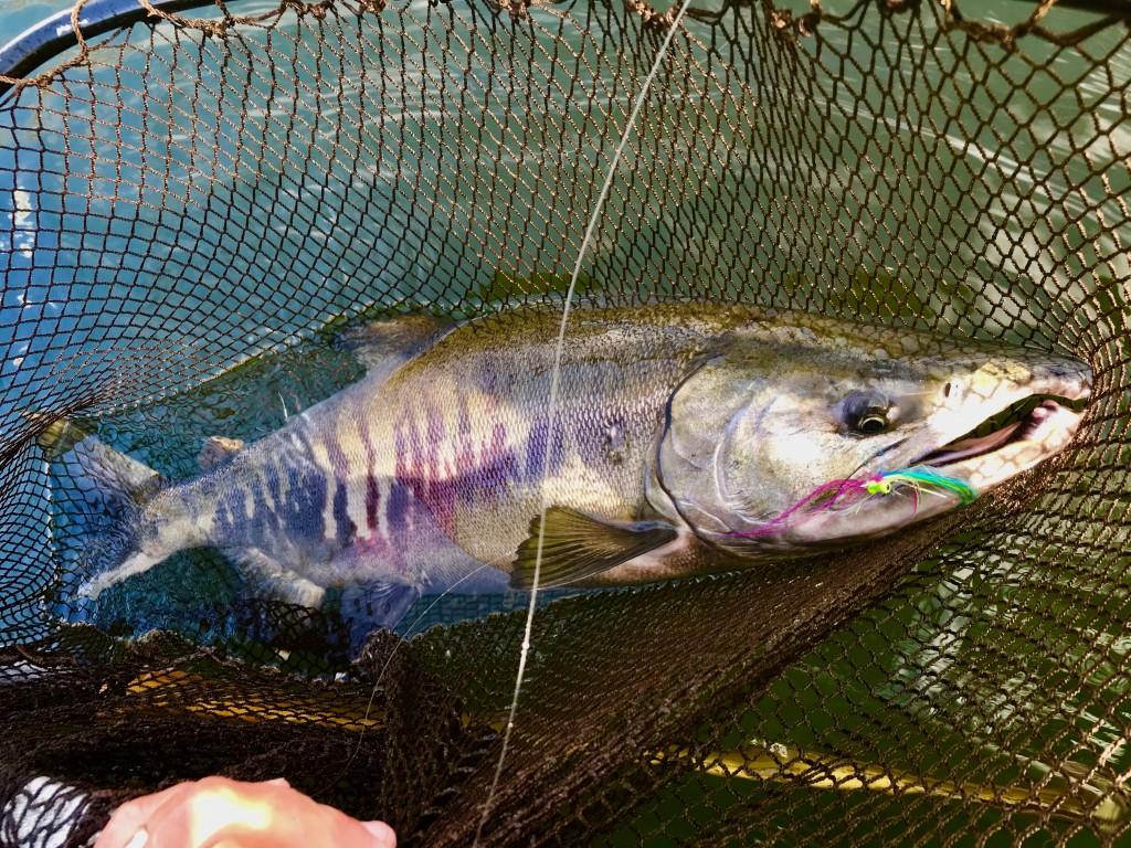 Chum salmon to the Echo Boost Beach 9 wt.