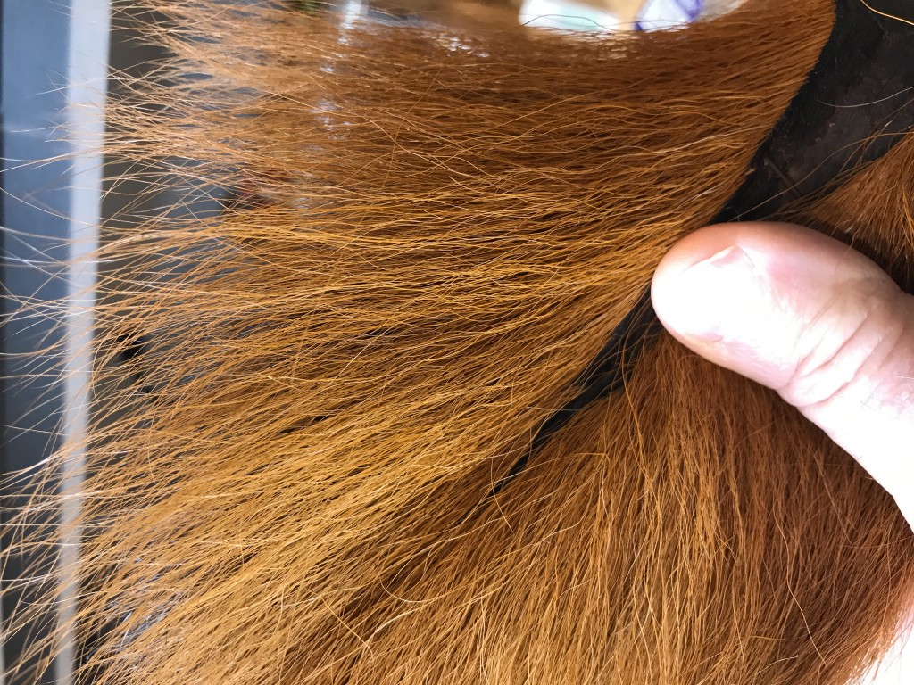 This bucktail  has been commercially dyed and packaged. Then I soaked it in soapy water with fabric softener and let it dry to allow the hair and the tail dry in it's natural shape. NOTE PLEASE: This hair is naturally curly, and no amount of soaking will remove the curl from this hair.