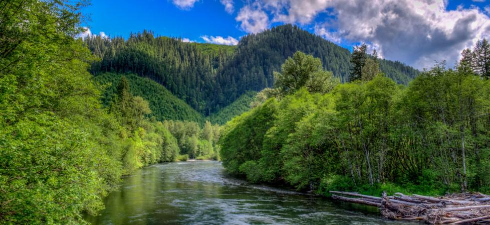 McKenzie River a