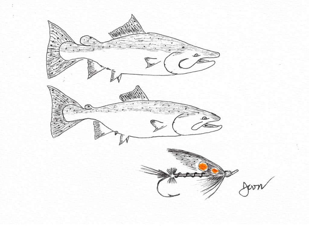 Finished Sketch of Chinook buck, hen, and swing fly.